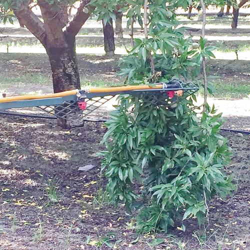 Photo 1: Spray boom is held in one position from low hanging limb. (Photo credit: Wes Asai)