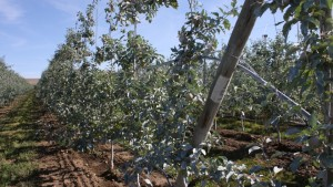 Pests, Diseases in Organic Growing the topic of Washington State University Fruit School