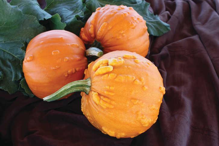 Pumpkin_ToadXPU9015