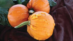 11 Pumpkin And Squash Varieties