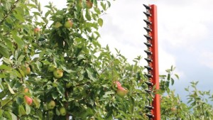 Mechanization Can Reduce Summer Pruning Costs