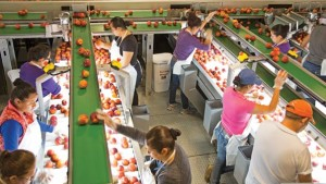 """Technology Helping To Bring That """"Fresh-Picked"""" Peach To Consumers"""