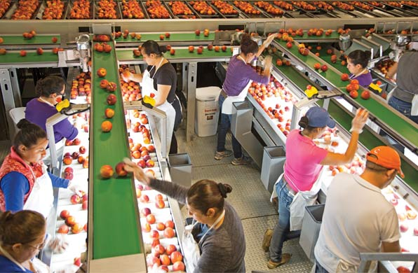 Titan Farms new packing line can sort by color, defect, weight, and dimension. (Photo credit: Webb's Photography)