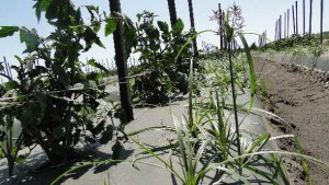 3 New Herbicides For Florida Farmers To Consider