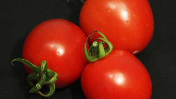 Close-up of Garden Gem tomato fruit