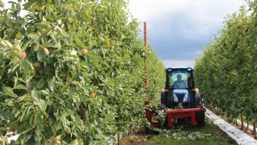 Tips to Transition to an Apple Fruiting Wall System