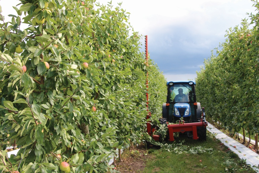"""The team at Lamont Fruit Farms takes a progressive approach to staffing. """"Give people the opportunity to excel,"""" Jose Iniguez says. """"If our employees want it, we give them the chance."""""""