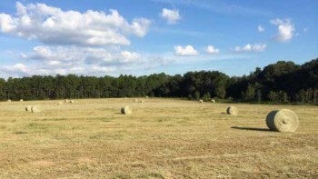 Former USDA Subtropical Agricultural and Research Station field in Brooksville, FL