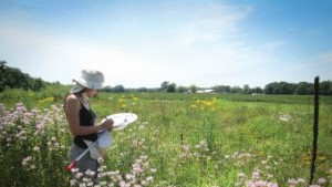New Video Takes An Inside Look At Pollination Research