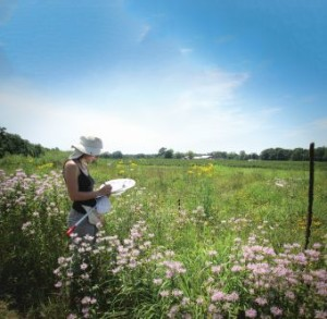 Research assistant Shaana Way of Michigan State University sampling bees in a wildflower planting adjacent to a highbush blueberry field. (Photo Credit: Julia Brokaw)
