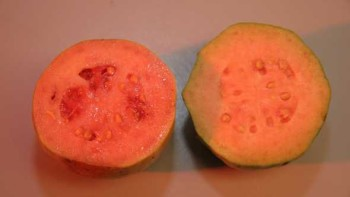 A guava fruit sliced in half