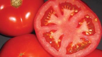 HM 1823 tomato variety