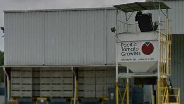 Pacific Tomato Growers packinghouse in Palmetto, FL