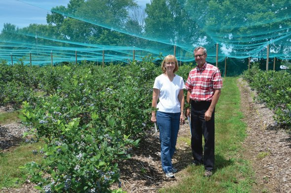 Timely Tips For A Healthy And Productive Berry Patch - Growing Produce