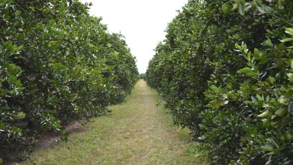 8 Trends Shaping The Future Of Florida Citrus