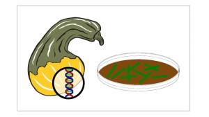 How The Genetic Engineering Process Works