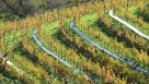 Old wool carpets help prevent erosion on this hillside vineyard farmed by Nord Viticultural Services.