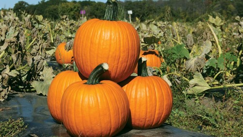 21 Pumpkin Varieties You Need To Know