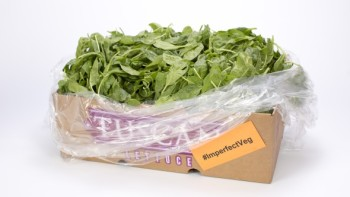 Second-cut spinach finds a home with IDP and saves money for Church Brothers. Photo credit: Church Brothers