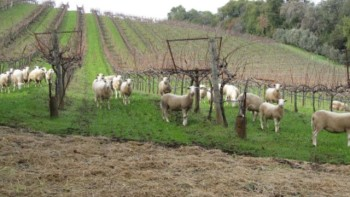 Photo: Benziger Family Winery