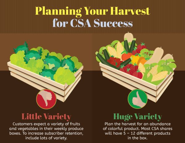 CSA harvest plan infographic fix.com