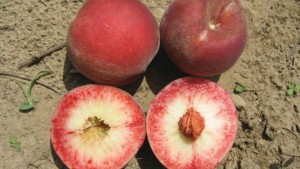 New Jersey Grower Hit With Peach Heist