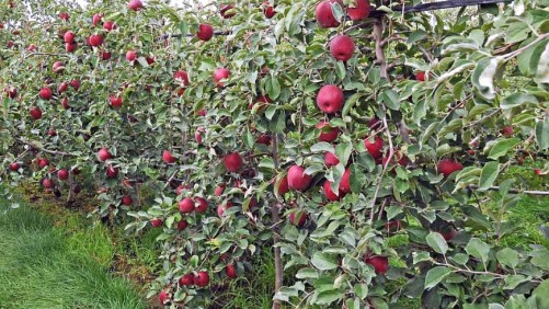 Focusing On Phenomics In Specialty Crops