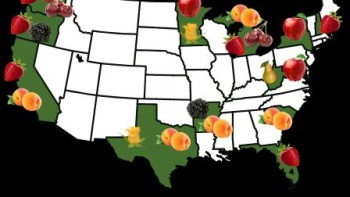 RosBREED will have an impact on nearly all the major U.S. rosaceous crop production areas.