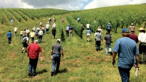 Virginia Looks To Boost Wine Business Through Grants