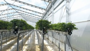 Strawberry Greenhouse Wins Sustainability Award