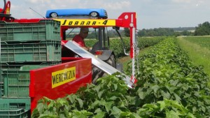 Mechanization In The Berry Patch Can Make Your Job Easier