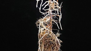 We're Just Scratching The Surface  Of Rootstock Research