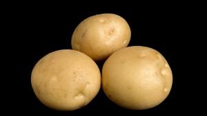 Potato Breeding Update From Cornell University