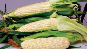Stokes Seeds Vegetable Variety Showcase