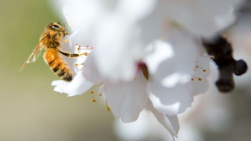 First Vaccine for Honey Bees Developed in Finland