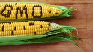 Social Media Posts On GMOs Falling Flat [Opinion]