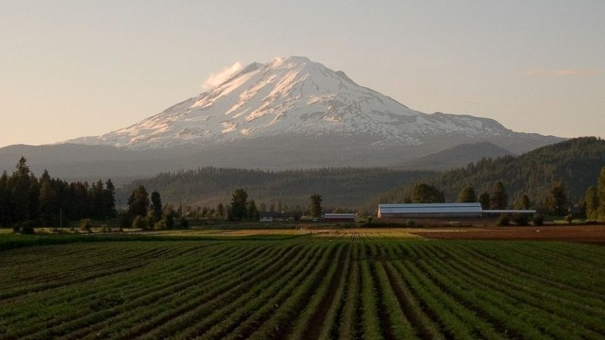 New Leader at Pacific Northwest Fruit Cooperatives