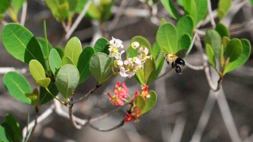 Study: Climate Change Putting Sting On Non-Native Pollinators