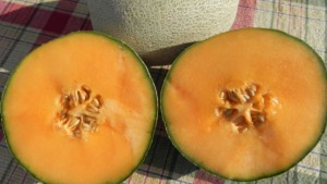 New Cantaloupe, Pumpkin, And Squash Seeds Available