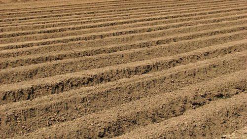 New Tool Helps Growers Improve Phosphorus Efficiency