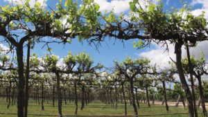 Labor Costs Have Growers Eyeing Options