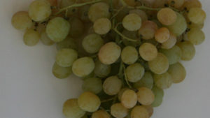 India Requesting Permission To Send Fresh Grapes To The U.S.