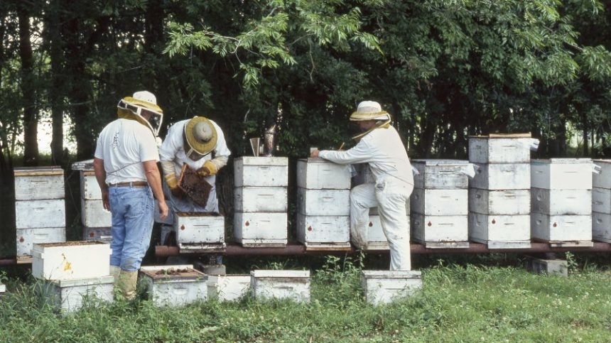 Beekeeping Gives Veterans New Opportunities