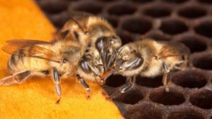 Time to Create Some Buzz for Honey Bees