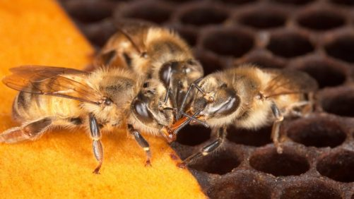 Save The Pollinators [Opinion]