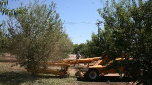 Proper Stockpiling Can Maintain Almond Quality