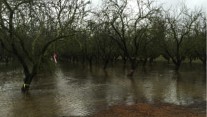 Almond Board Funding Groundwater Recharge Research