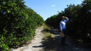 Florida's Top Citrus Growers Sound Off On Critical Matters