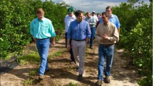 Marco Rubio Backs Bill To Save Florida Citrus