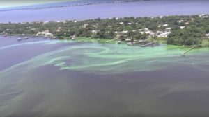 Epic Algae Blooms Strand South Florida in a Sea of Green